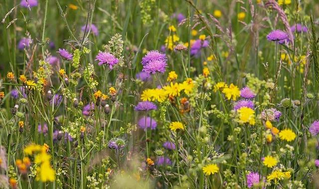 Préservation de la biodiversité